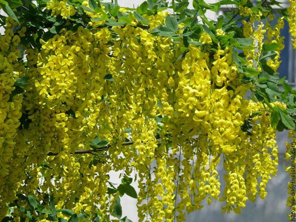 Значение вышивки Цветы  HMinforu
