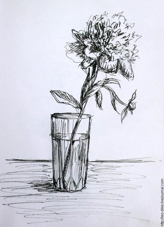 Комнатные растения и цветы  уход размножение пересадка