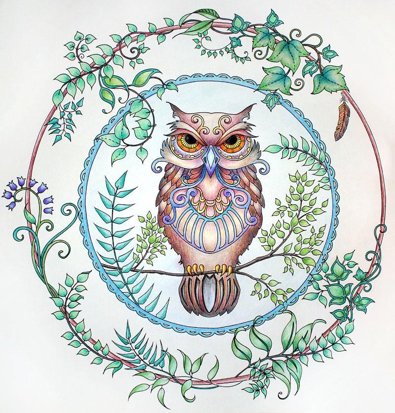 Раскраска попугая картинка